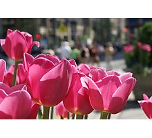 Tulips in the city. Photographic Print