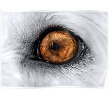Tommy's eye Poster