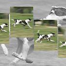Run, Spot! Run! by Voytek Swiderski