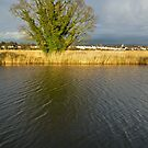 Tree on the Exeter canal bank by peteton
