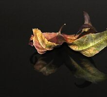 Leaf reflection by Lyn Evans