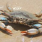 I feel crabby by Michele Conner