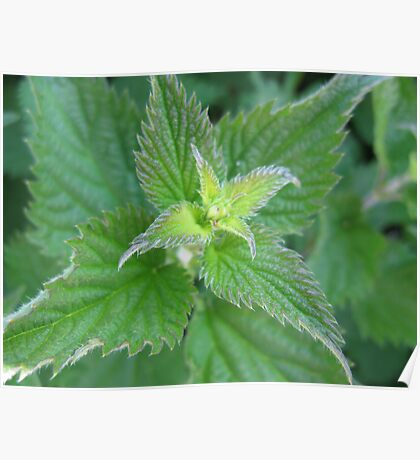another nettle by dawn peace Poster