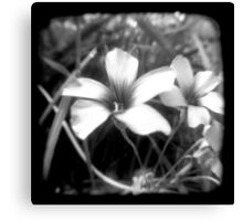 Oxalis - Through The Viewfinder Canvas Print