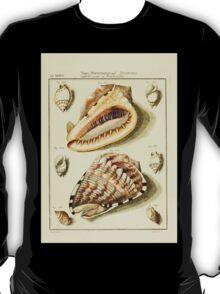 Neues systematisches Conchylien-Cabinet - 142 - Cassicles Verae et Fimbriatae T-Shirt