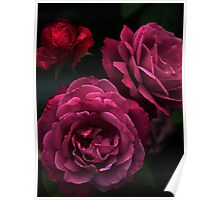 Rosie Roses Poster