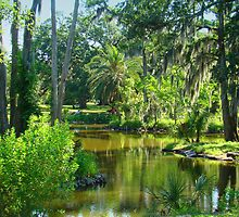 Beautiful Trees  Surrounding The Lagoon by Wanda Raines