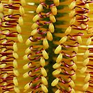 Funky Colours Banksia by Luke and Katie Thurlby
