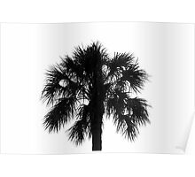 Naked Palm Poster
