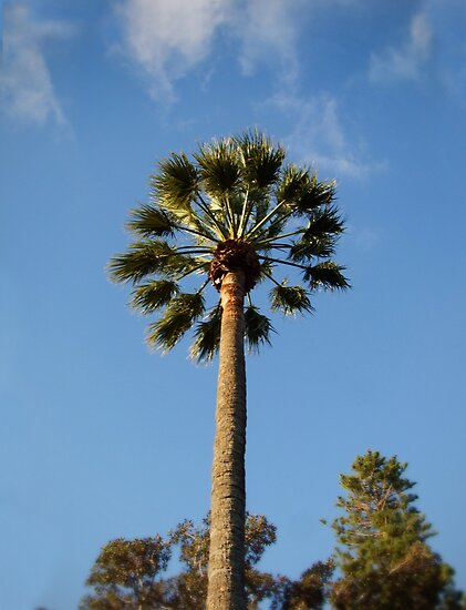 Palm Tree by Steven Vogel