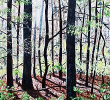 'Deep Woods Along the Glen Burney Trail'  by Jerry Kirk