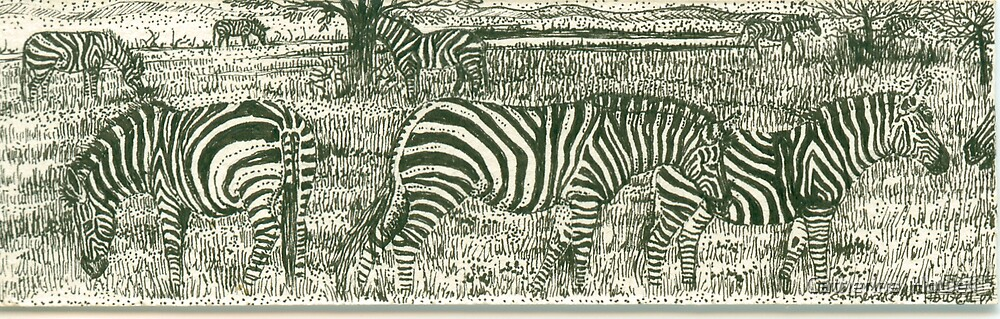 Zebra Line by Catherine  Howell