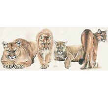 American Cougar Photographic Print
