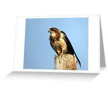 Swainson's Hawk - Buteo Swainsoni Greeting Card