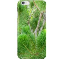 Calothamnus Foliage iPhone Case/Skin
