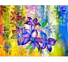 Clematis Summer Photographic Print