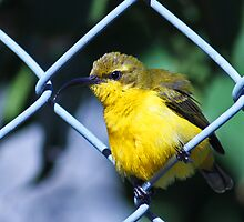 bird on a wire by Ryleigh