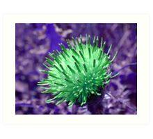 Thistle Flower altered image Art Print
