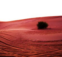 Desert Tracks by AndrooE