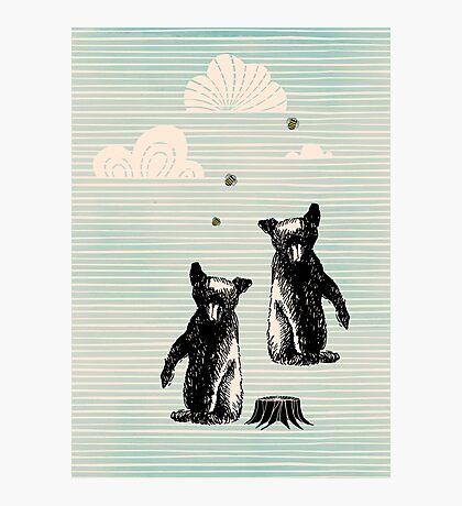 the bears Photographic Print