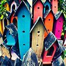 Upscale Bird Community by MichelleOkane