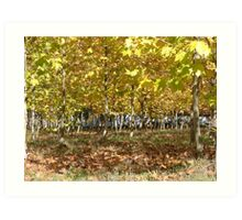 Trees and leaves Art Print