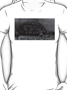 Galapagos Tortoise Baby T-Shirt