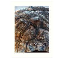 Galapagos Tortoise Shell Art Print