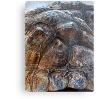 Galapagos Tortoise Shell Metal Print