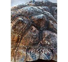 Galapagos Tortoise Shell Photographic Print