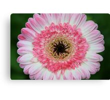 Daisy In Dry Brush Canvas Print