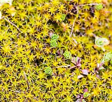 Young Moss in Spring by MaxalTamor