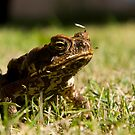 cane toad 2 by shaun965