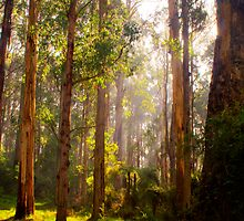 Beams of light stream through the trees at Olinda Falls in portrait by Elana Bailey