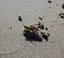 Beached Hopper by Calander