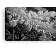 Mono Tulips  Canvas Print