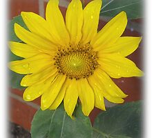 Sunflower 3 by Linda Bennett