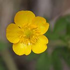 Buttercup by Agnes McGuinness