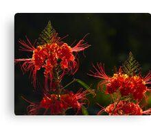 blossoms of a tree - flor de un arbol Canvas Print
