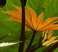 leaves in the sun - hojas en el sol by Bernhard Matejka