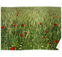 Red Poppies Growing In A Corn Field  Poster