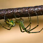 Orchard Spider by Otto Danby II