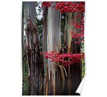 Splash of  Autumn Colours Poster