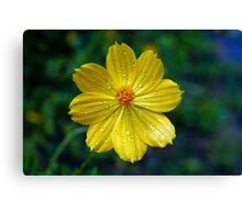Yellow Nectar Canvas Print