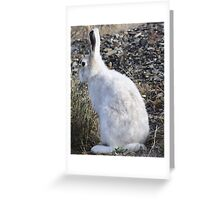 Awesome Arctic Hare Greeting Card