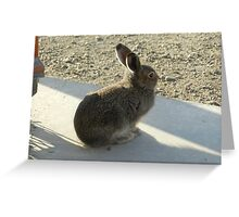 Cool Arctic Hare Greeting Card