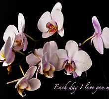 EACH DAY I LOVE YOU MORE. by Thomas Barker-Detwiler