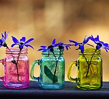 Spring by Dipali S