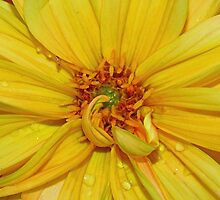 Yellow flower by Dipali S