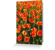 Blazing Spring Greeting Card
